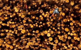 מארקס מתיאס, נשיא חברה לייצור דסקיות עץ